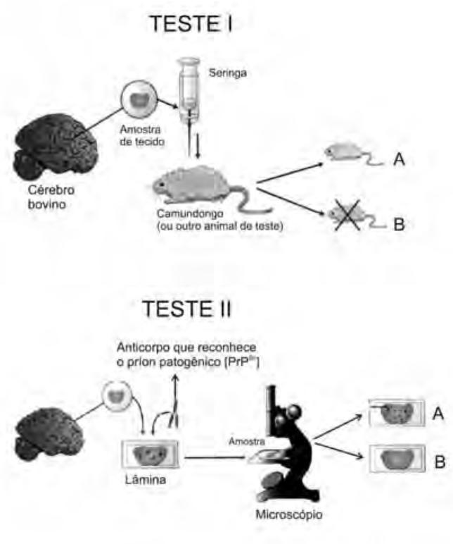 1c34ada2171 ENEM – Ciências da Natureza e suas Tecnologias
