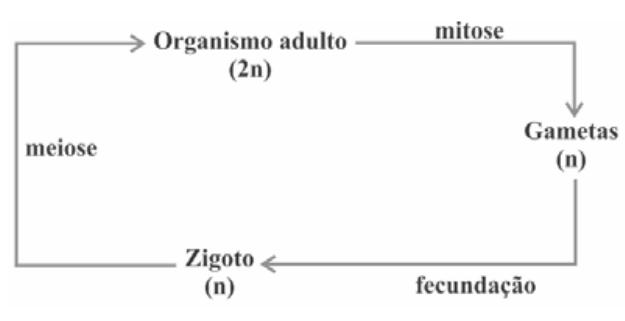 4a0be9b4fbb Considerando-se um modelo simplificado padrão para geração de indivíduos  viáveis