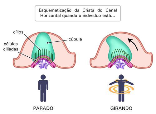 Figura 3 - semana 4